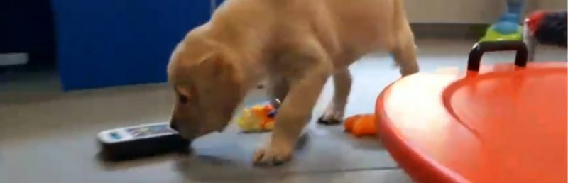 Guide Dogs launches 'Puppy Cam Live' appeal on Facebook