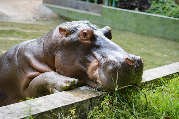 HiPPOs are the most dangerous animal in your digital strategy - the risks of NOT having a data strategy