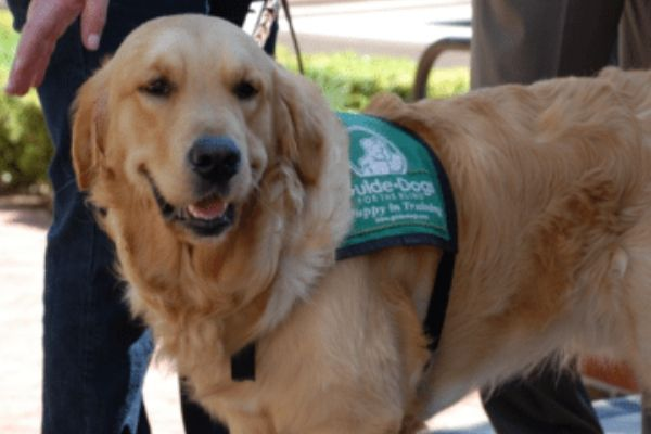 Proximity and MC&C to oversee Guide Dog fundraising and marketing