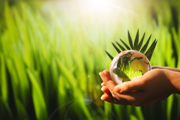 How environmentally friendly is your website?
